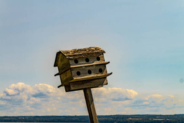 Purple Martin House
