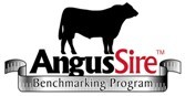 Another Alloura Bull Selected for the Angus Sire Benchmarking Program