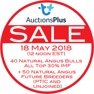More Photos Uploaded - Natural Angus Sale - 18 May 2018