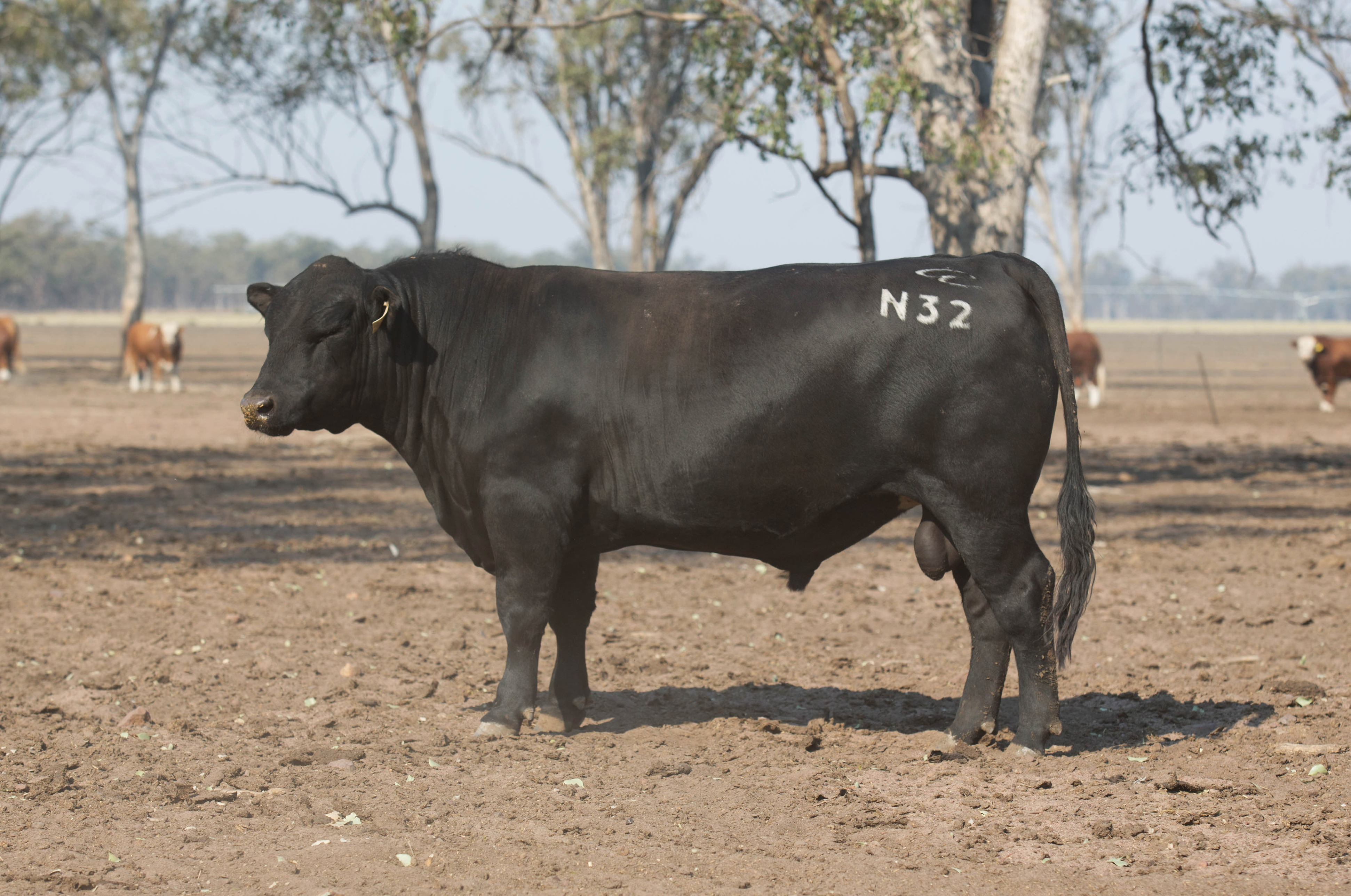 Lot 55: DGJ N32