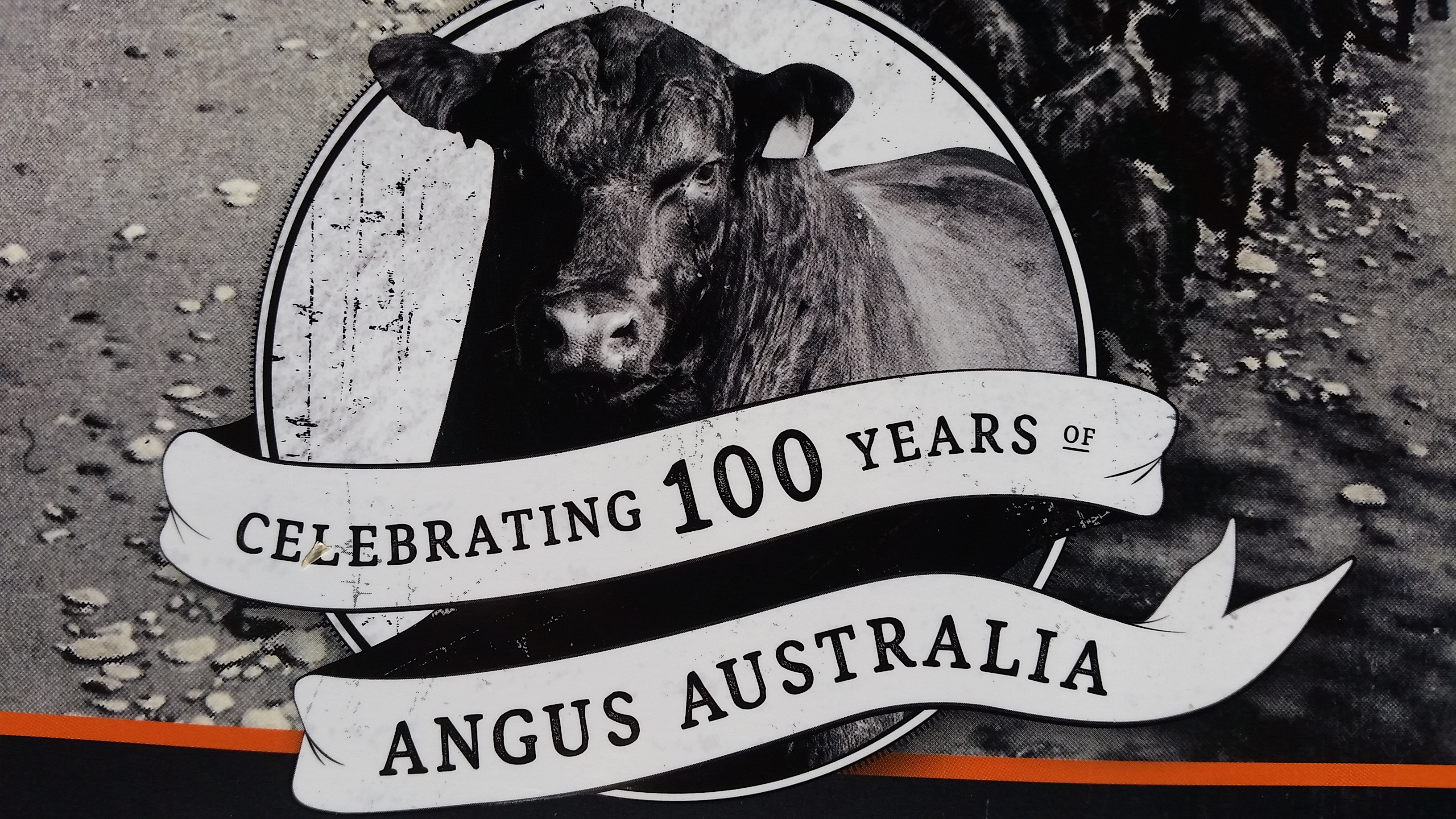 Bring on another 100 Years of Angus Cattle in Australia!