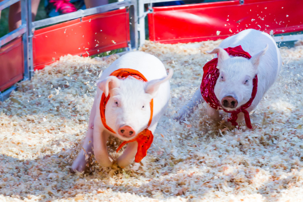 THE STANISLAUS COUNTY FAIR HAS SOMETHING FOR EVERYONE!