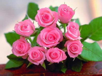 THE PINK ROSE.  By: Sathian