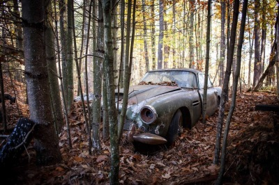 abandoned car in the forest nature taken over
