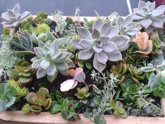Garden Dish, Office Accessories, Personalized Living Gifts, Recycled Planters, Hypertufa, Succulents, Hawaii
