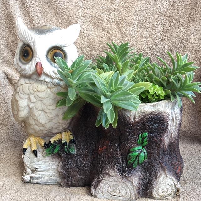 Plants, Organic Gardening, Accessories for Gardners