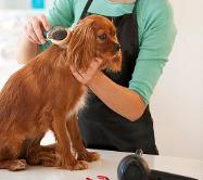 dog cat grooming boarding Pearland Texas