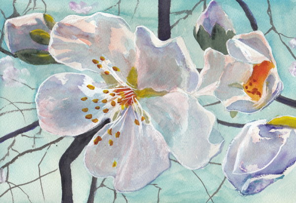 "<img src=""almond blossoms floral painting.jpg"" alt=""original watercolor painting"">"