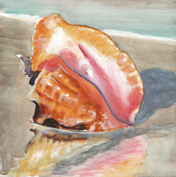 Conch Shell copy