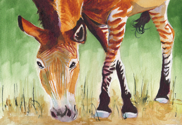 Okapi Watercolor Painting copy