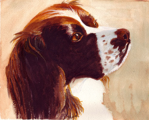 spaniel dog watercolor painting