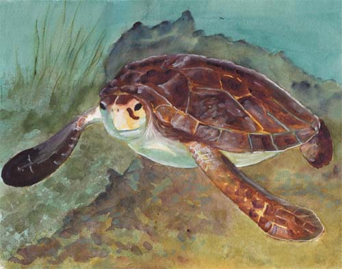 Green Sea Turtle copy