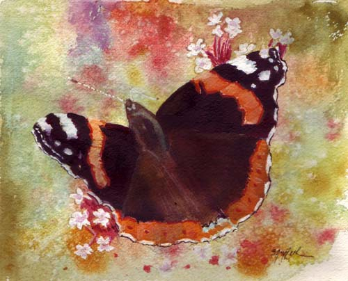 red admiral butterfly500px