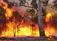 Bushfire Assessments - Blue Mountains Builder
