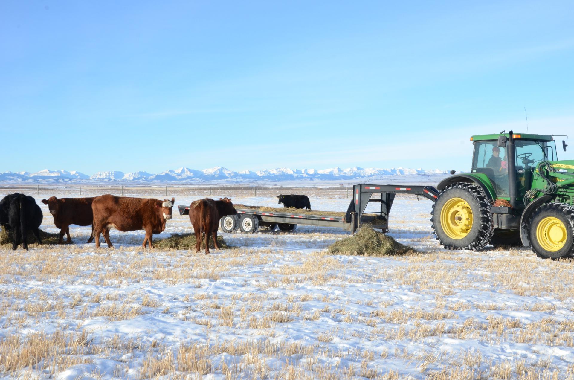 Feeding in the winter