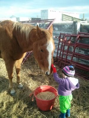 Grandma Nelsons Horse Hunter