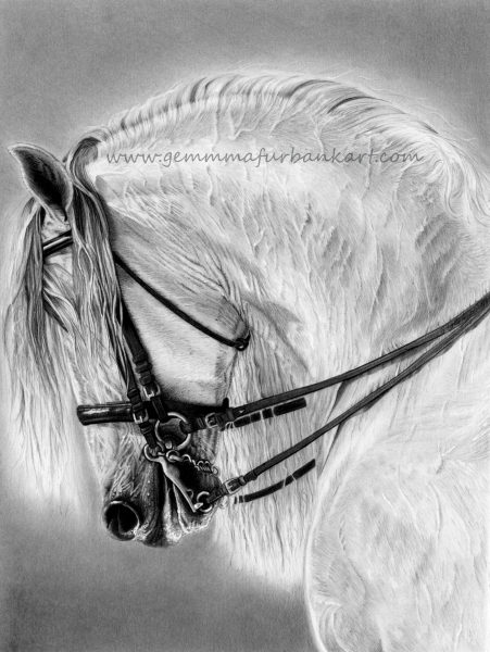 01. Andalusian - Horse.
