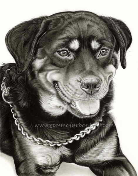 25. Marnie - Rottweiler.