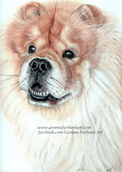 Chow Chow, Dog, Pet Portrait, Coloured Pencil, Gemma Furbank, Drawing