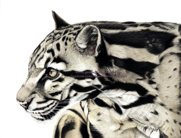 Clouded Leopard in Coloured Pencil