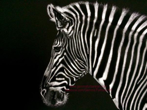 Zebra in Soft Pastel