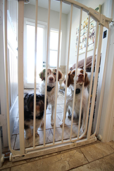 Dogs in the Mudroom