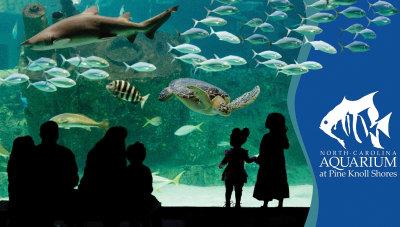 Shark Tank at the NC Aquarium