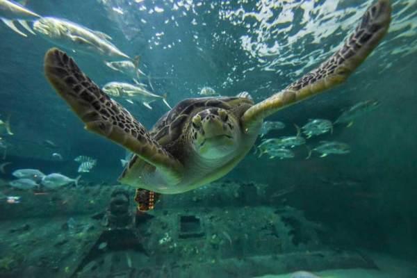NC Aquarium in Pine Knoll Shores NC.