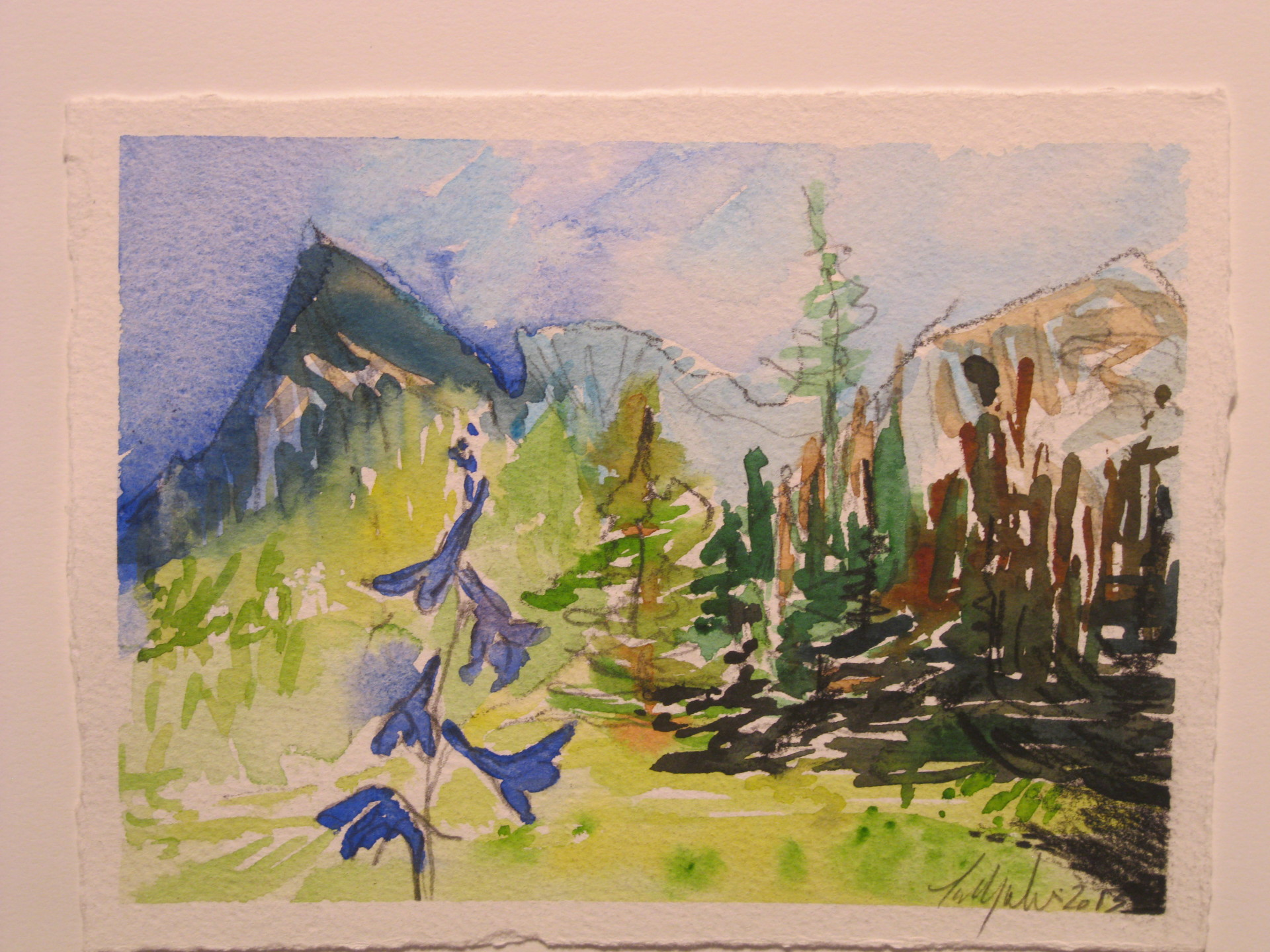 Larkspur, Blue Creek Meadow, 2013.