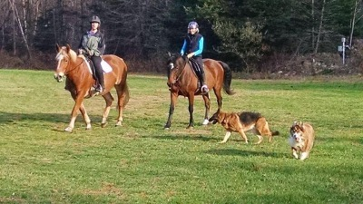 Riding Lessons near Montville, CT