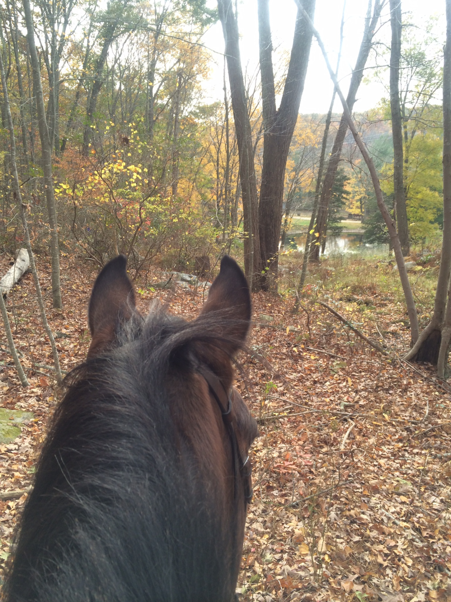Trail Riding In SE, CT