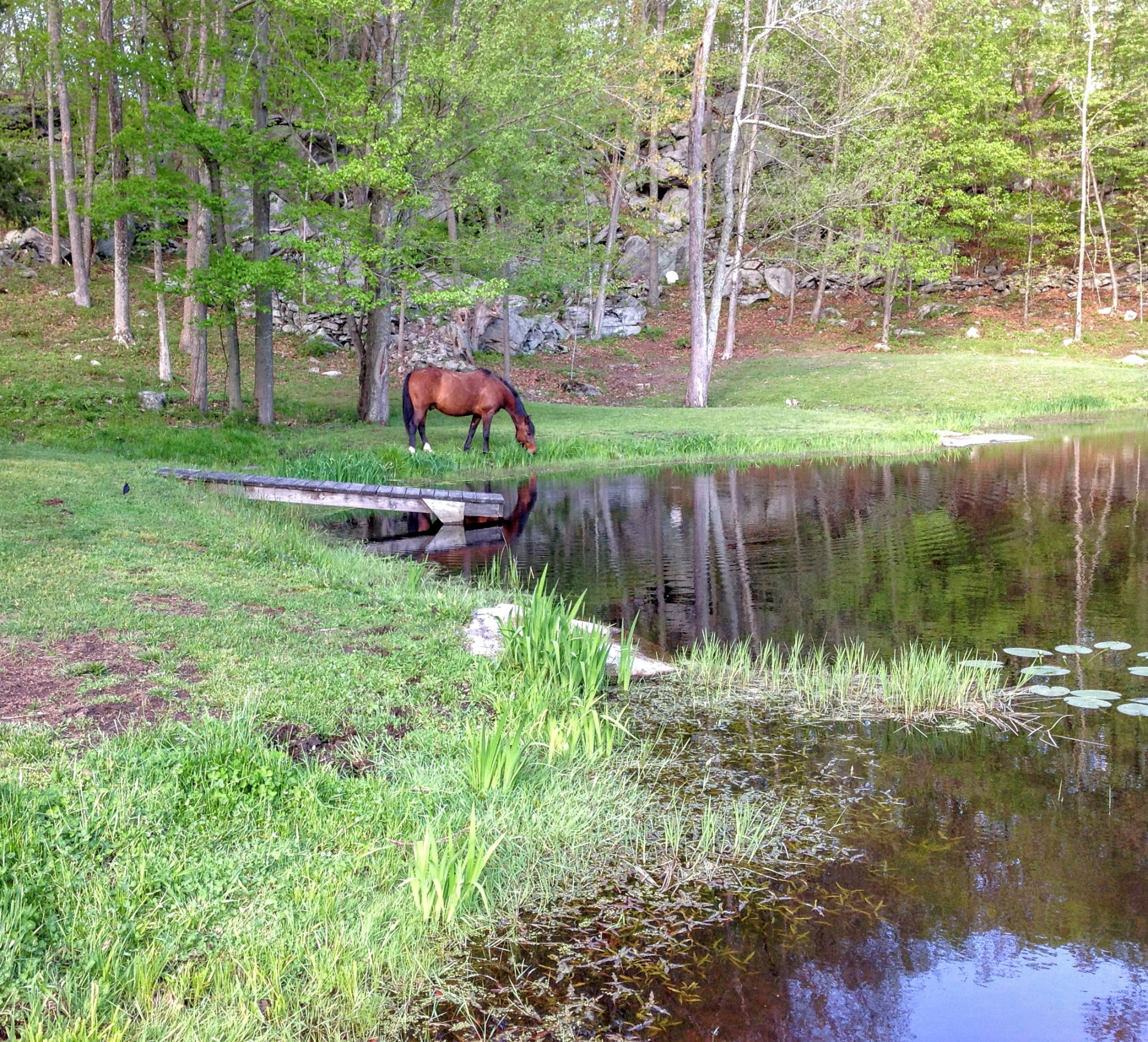 Horse Riding Lessons in New London County, CT.