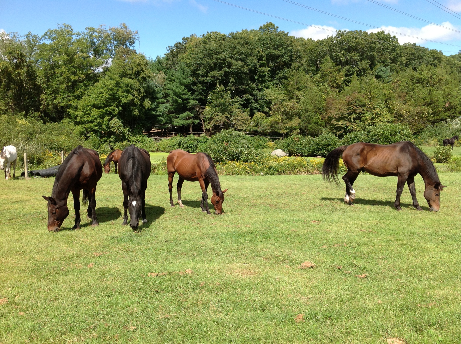 Riding Lessons, CT