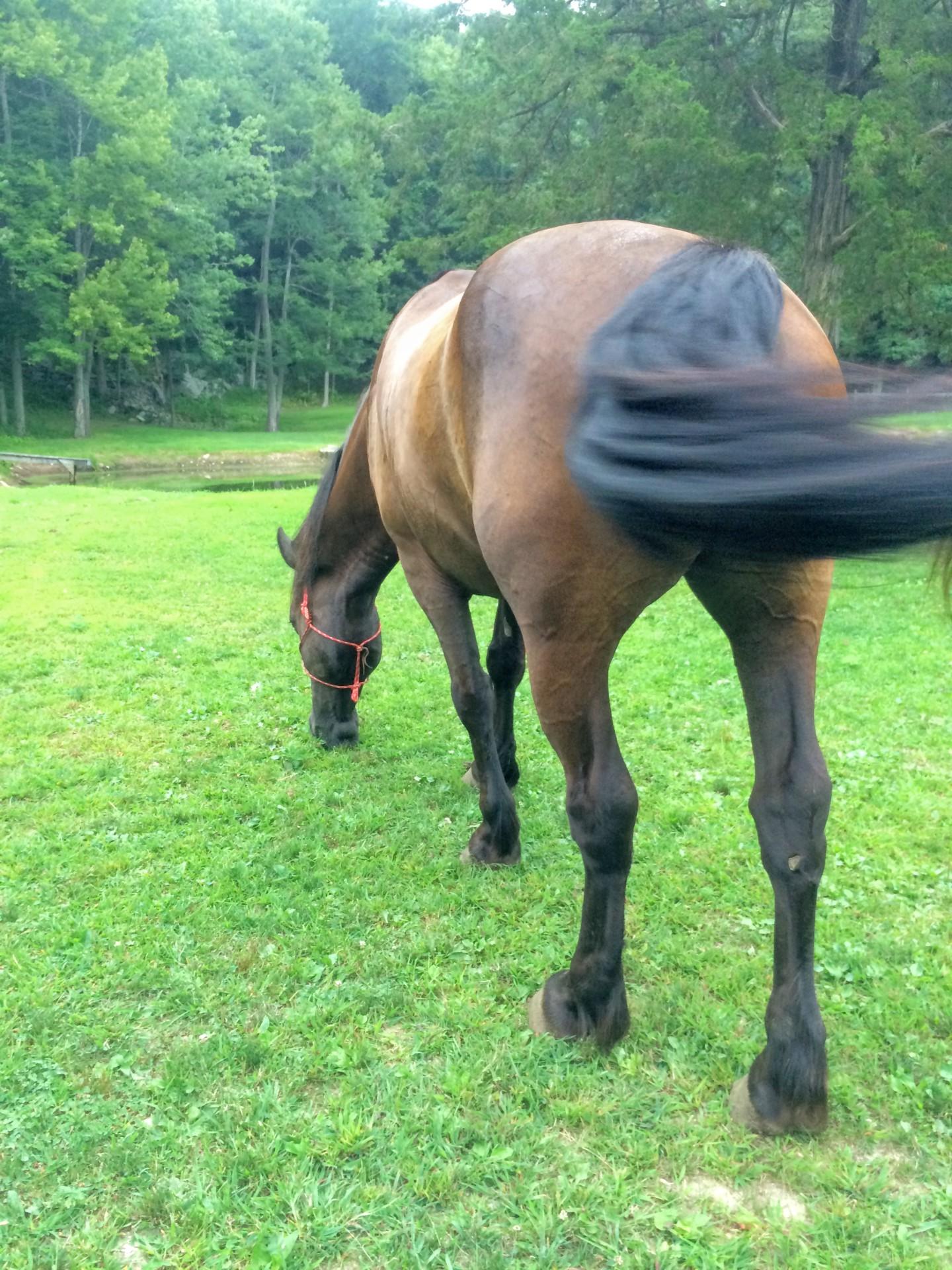 Horse Boarding, CT