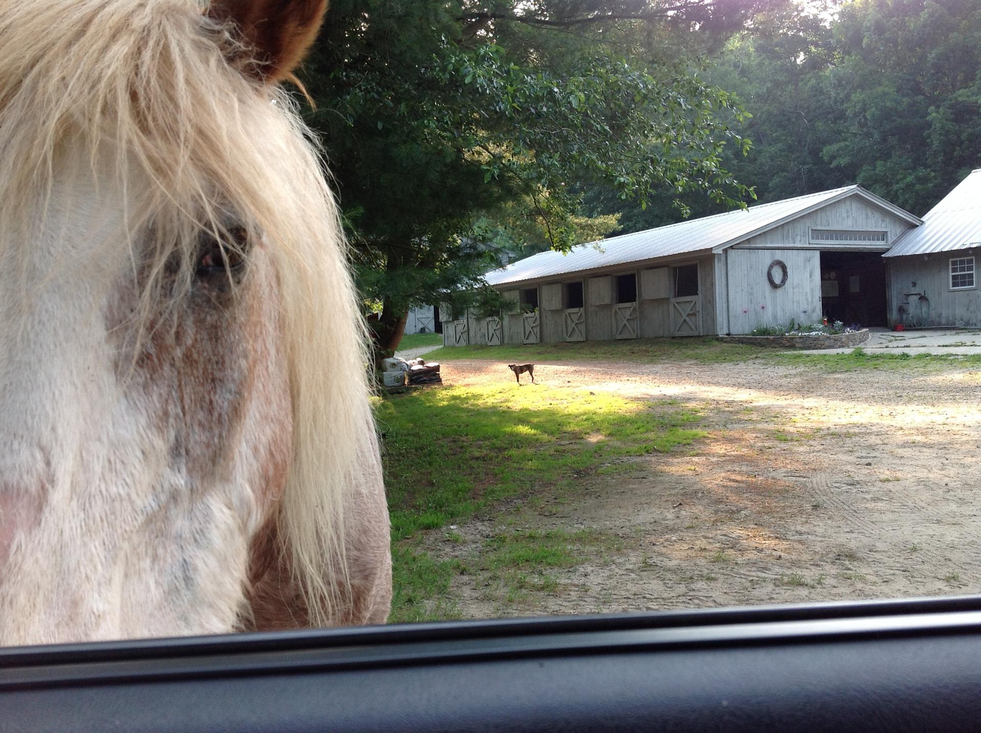 Horse Boarding, SE, CT