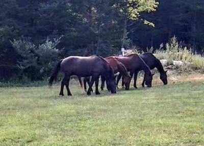 Laurel Ledge Farm near Montville, CT