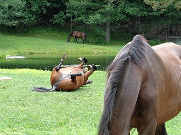 Horse Boarding near Montville, CT