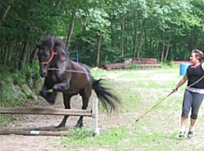 Horse Boarding in Oakdale, CT