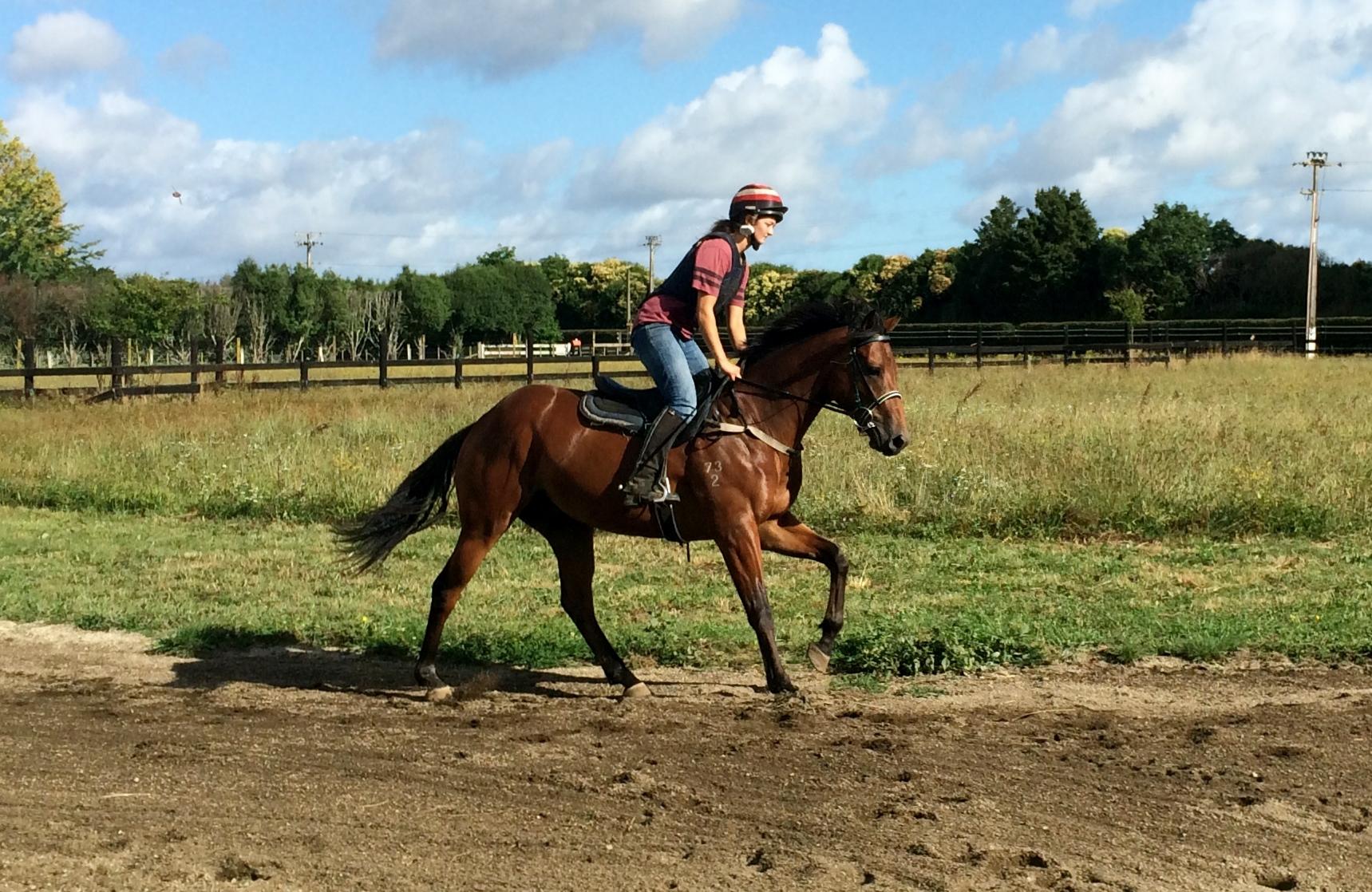 Racehorse breaking in