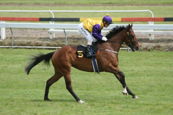 Racehorse trainers NZ