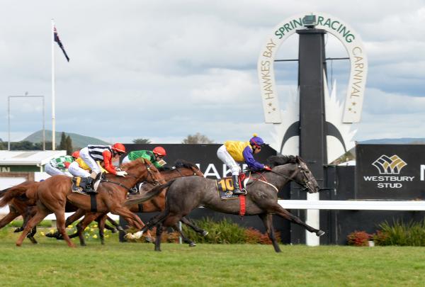 Racehorse training NZ