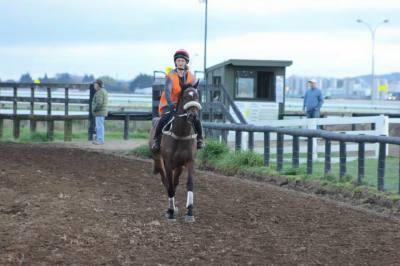 $100k Prizemoney up for grabs in Racehorse Trainer Challenge
