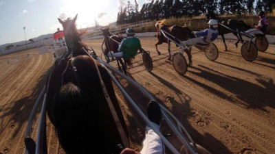 Aussie Horse Trainer Cops Fraud Charge for Training Horse That Didn't Exist