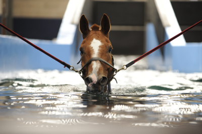 Benefits of Racehorse Hydrotherapy