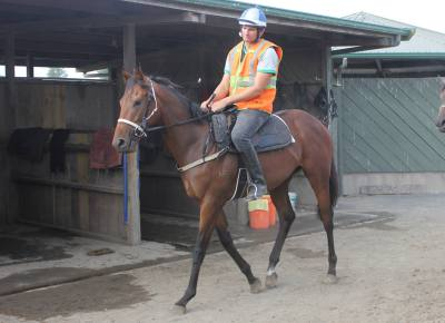 Becoming a Horse Trainer - Things You Need to Know