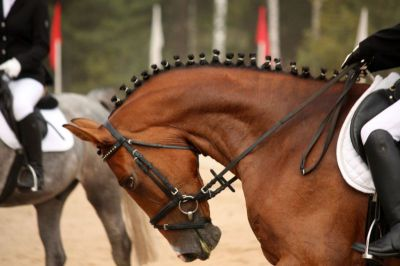 Equitation Scientists Says no Room for Hyperflexion in Racehorse Training
