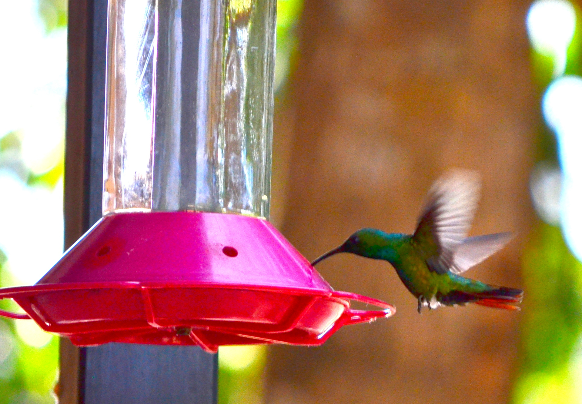 HUMMING BIRDS ON PROPERTY