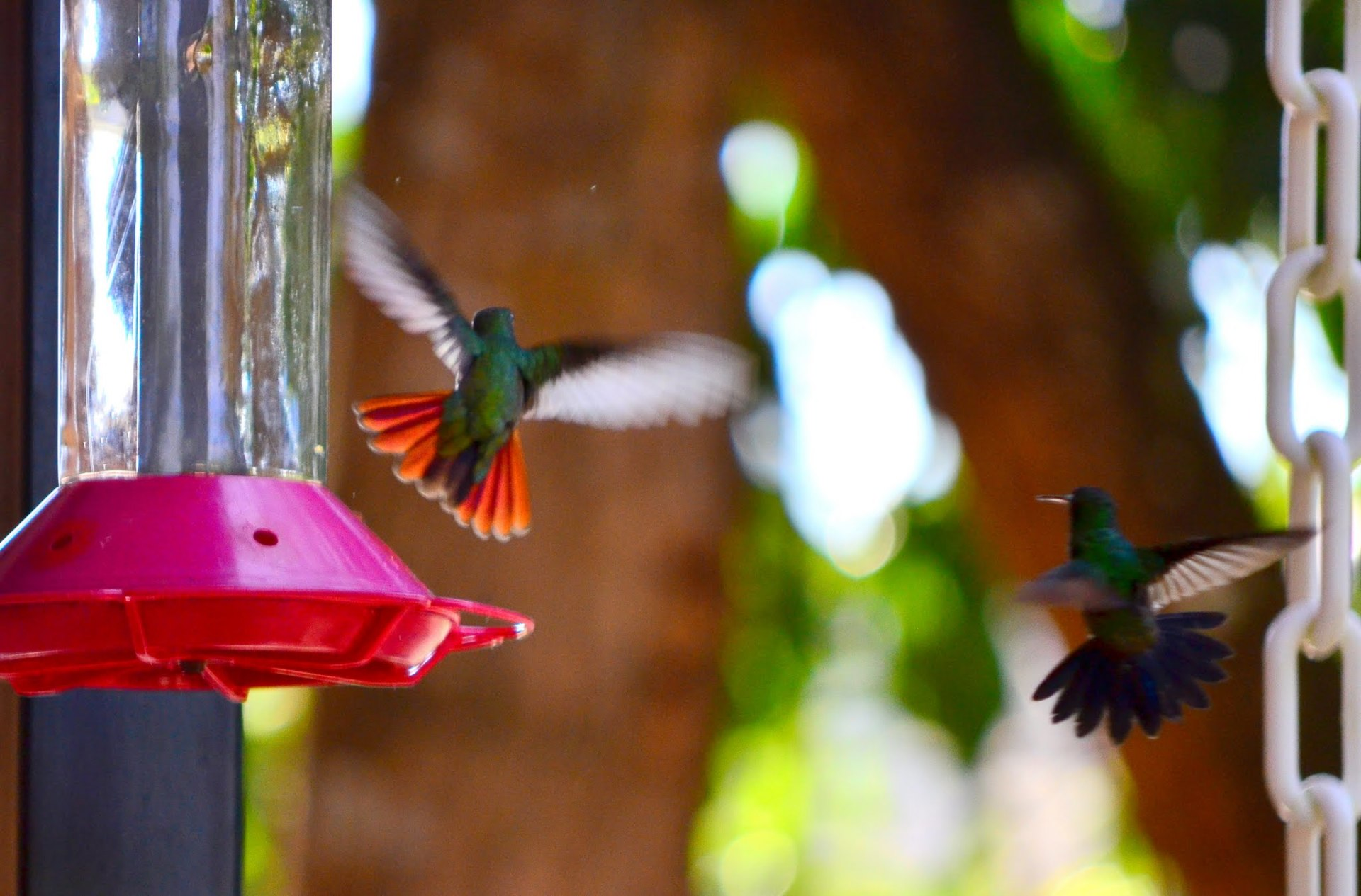 MANY HUMMING BIRDS