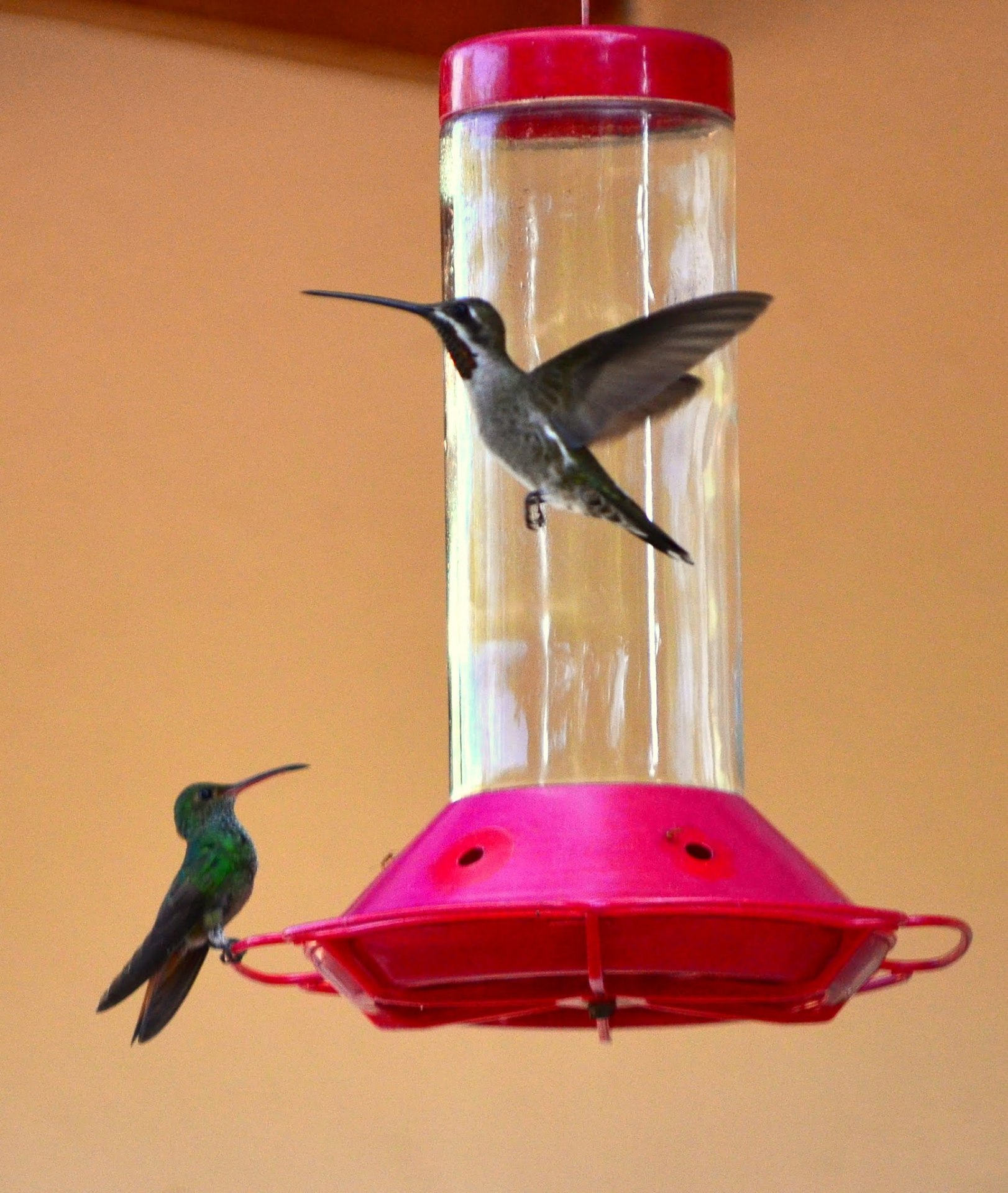 MORE HUMMING BIRDS