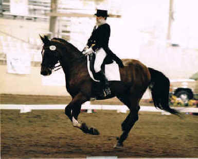 Extended canter at Pan Am trials, Burbank, CA.